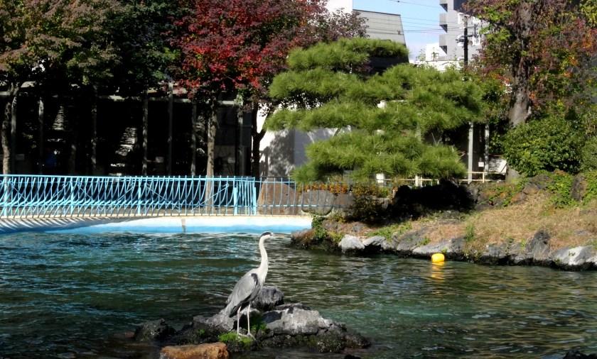 tennoji zoo flamingo
