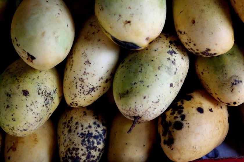 guimaras mango