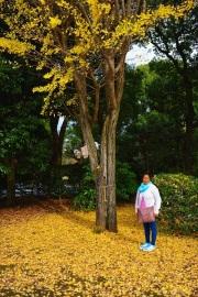 Tokyo Itinerary Kitanomaru Park